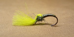GP CDC Emerger