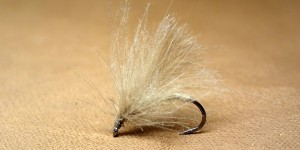 GP CDC Sedge